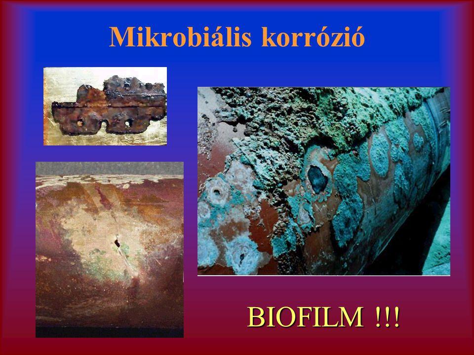 Mikrobiális korrózió BIOFILM !!!