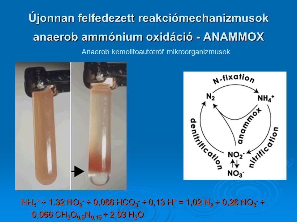 Anaerob kemolitoautotróf mikroorganizmusok