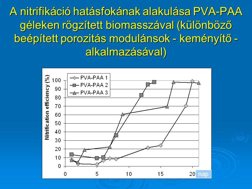 A nitrifikáció hatásfokának alakulása PVA-PAA géleken rögzített biomasszával (különböző beépített porozitás modulánsok - keményítő - alkalmazásával)