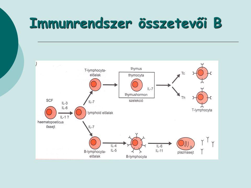 Immunrendszer összetevői B