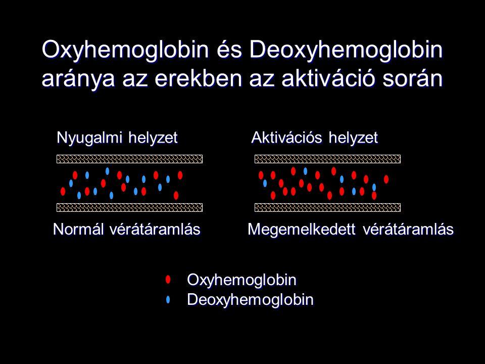 Oxyhemoglobin és Deoxyhemoglobin aránya az erekben az aktiváció során