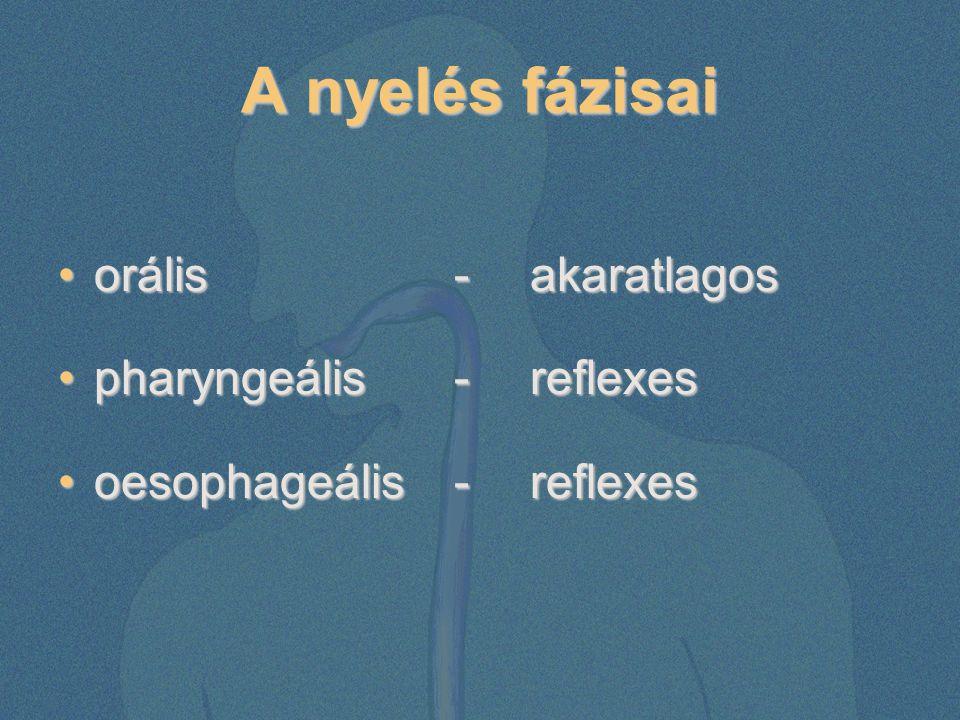 A nyelés fázisai orális - akaratlagos pharyngeális - reflexes