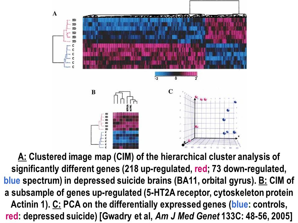 A: Clustered image map (CIM) of the hierarchical cluster analysis of significantly different genes (218 up-regulated, red; 73 down-regulated, blue spectrum) in depressed suicide brains (BA11, orbital gyrus).