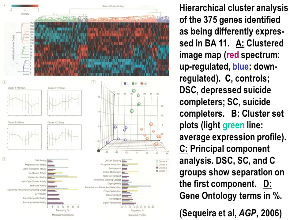 Hierarchical cluster analysis of the 375 genes identified as being differently expres-sed in BA 11. A: Clustered image map (red spectrum: up-regulated, blue: down-regulated). C, controls; DSC, depressed suicide completers; SC, suicide completers. B: Cluster set plots (light green line: average expression profile). C: Principal component analysis. DSC, SC, and C groups show separation on the first component. D: Gene Ontology terms in %.