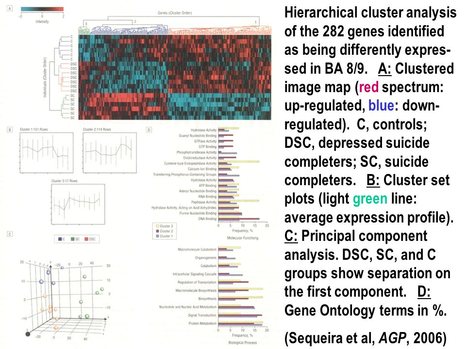 Hierarchical cluster analysis of the 282 genes identified as being differently expres-sed in BA 8/9. A: Clustered image map (red spectrum: up-regulated, blue: down-regulated). C, controls; DSC, depressed suicide completers; SC, suicide completers. B: Cluster set plots (light green line: average expression profile). C: Principal component analysis. DSC, SC, and C groups show separation on the first component. D: Gene Ontology terms in %.