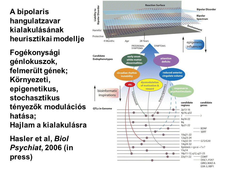 A bipolaris hangulatzavar kialakulásának heurisztikai modellje