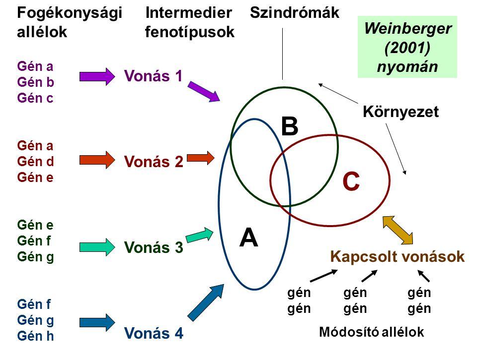 B C A Fogékonysági Intermedier Szindrómák allélok fenotípusok
