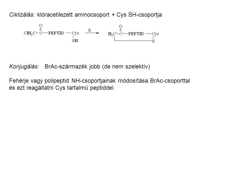 Ciklizálás: klóracetilezett aminocsoport + Cys SH-csoportja