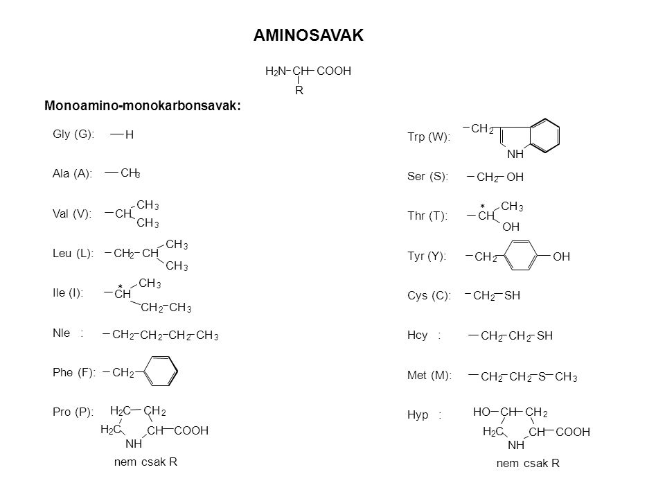AMINOSAVAK Monoamino-monokarbonsavak: CH R H N COOH Gly (G): Ala (A):
