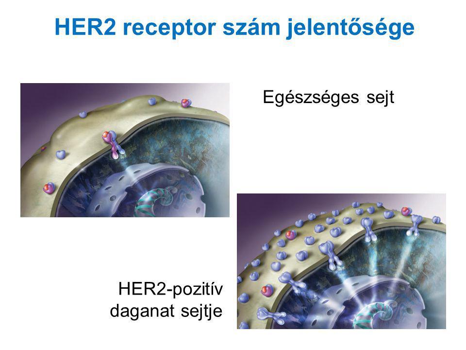 HER2 receptor szám jelentősége