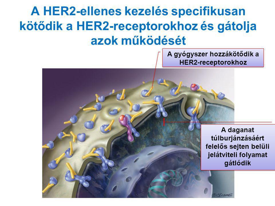 A gyógyszer hozzákötődik a HER2-receptorokhoz