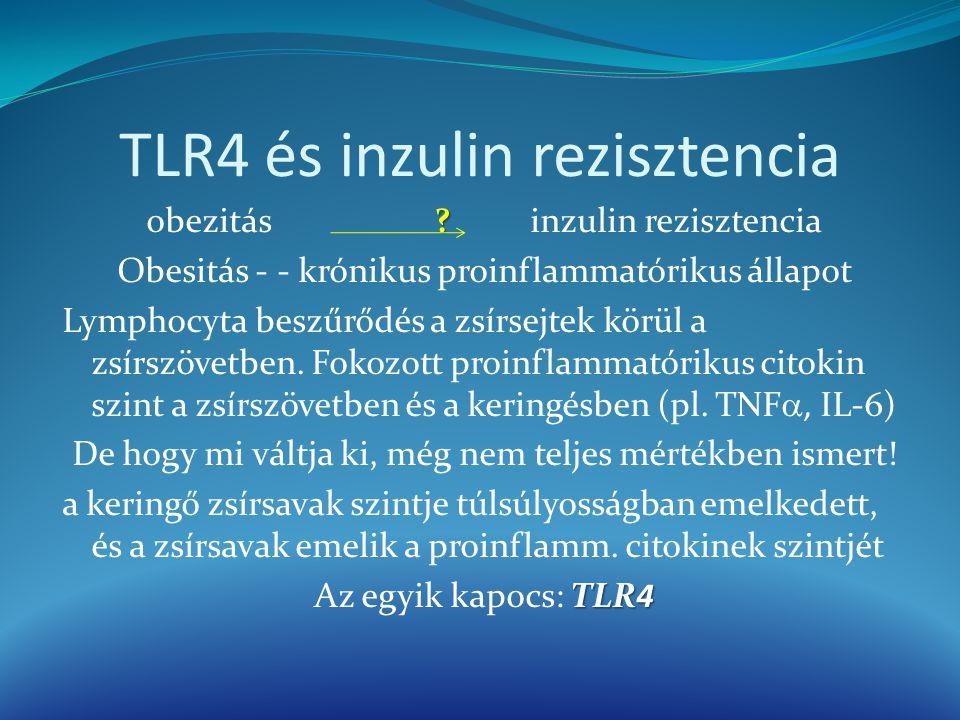 TLR4 és inzulin rezisztencia