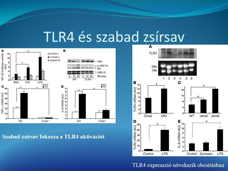 TLR4 és szabad zsírsav Szabad zsírsav fokozza a TLR4 aktivációt