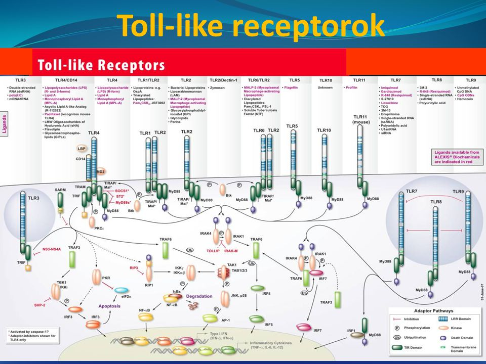 Toll-like receptorok