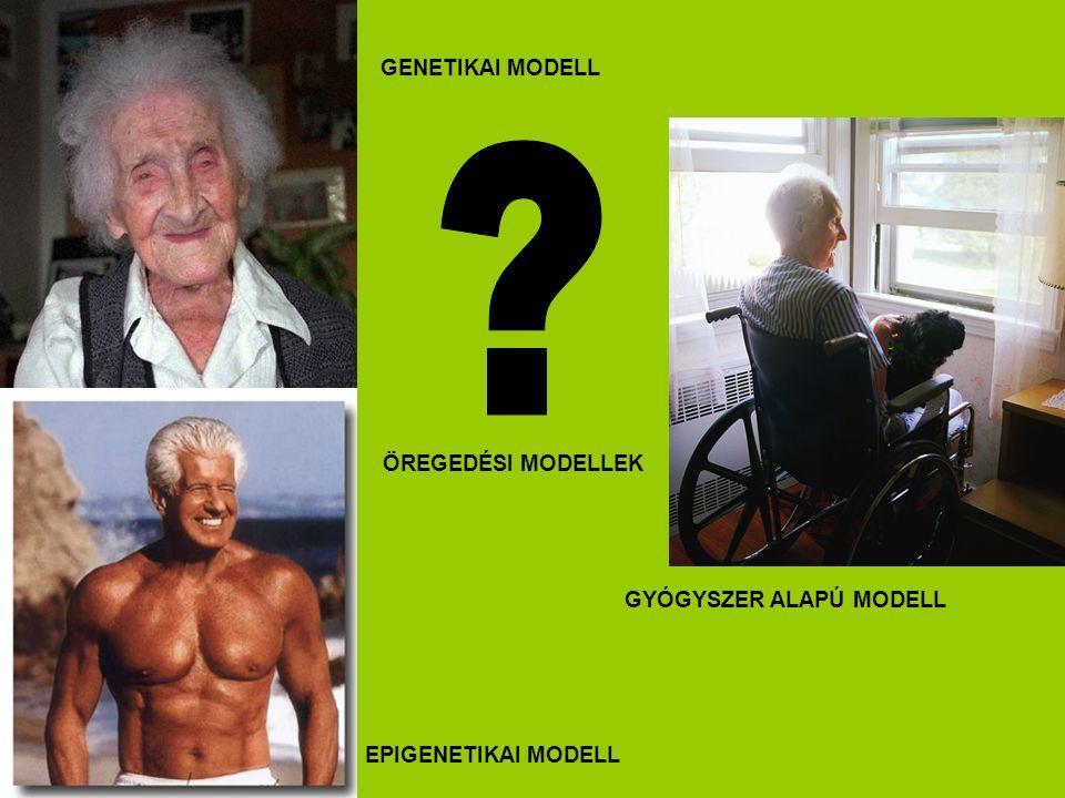 GENETIKAI MODELL ÖREGEDÉSI MODELLEK GYÓGYSZER ALAPÚ MODELL