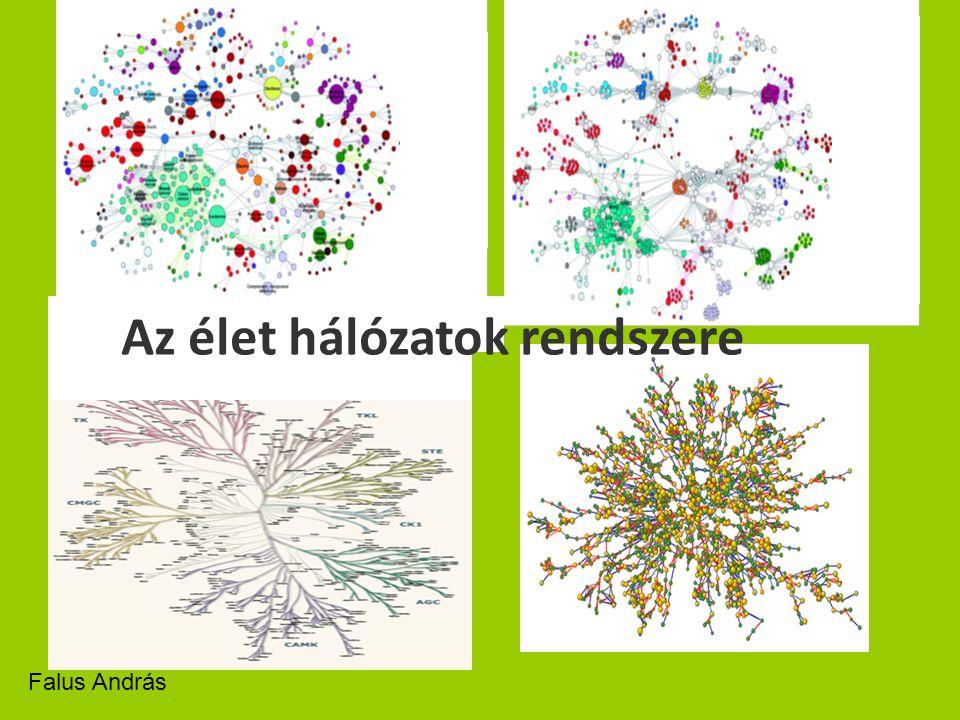 Az élet hálózatok rendszere