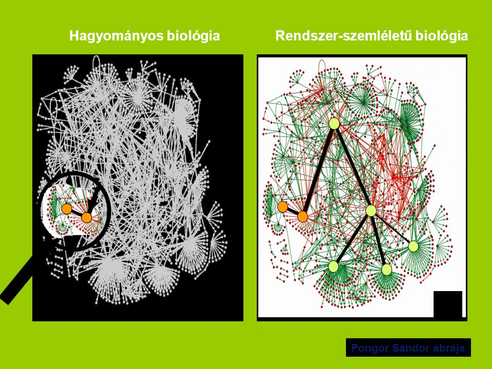Hagyományos biológia Rendszer-szemléletű biológia