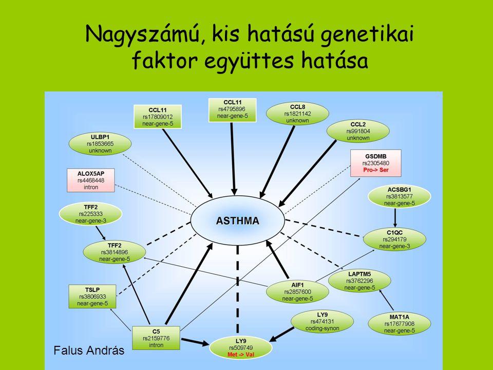 Nagyszámú, kis hatású genetikai faktor együttes hatása