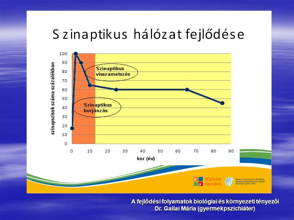 A fejlődési folyamatok biológiai és környezeti tényezői Dr