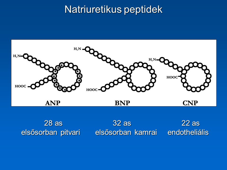 Natriuretikus peptidek