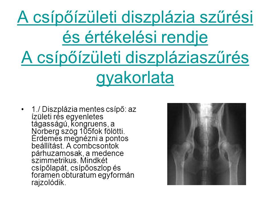 A csípőízületi diszplázia szűrési és értékelési rendje A csípőízületi diszpláziaszűrés gyakorlata