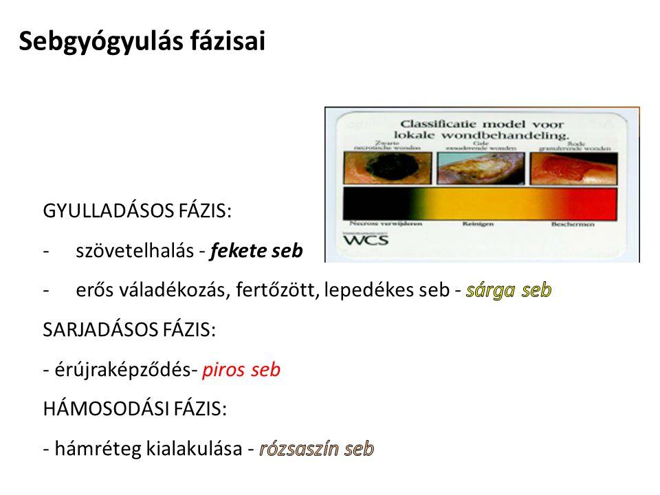 Sebgyógyulás fázisai GYULLADÁSOS FÁZIS: szövetelhalás - fekete seb