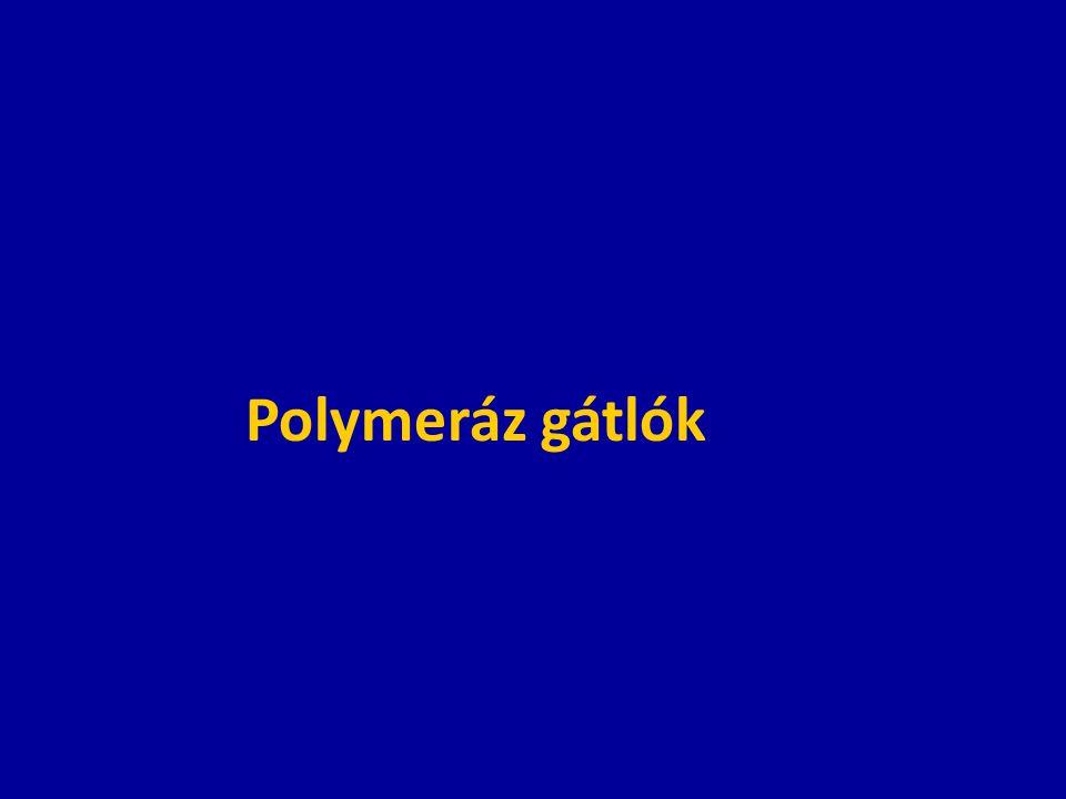 Polymeráz gátlók