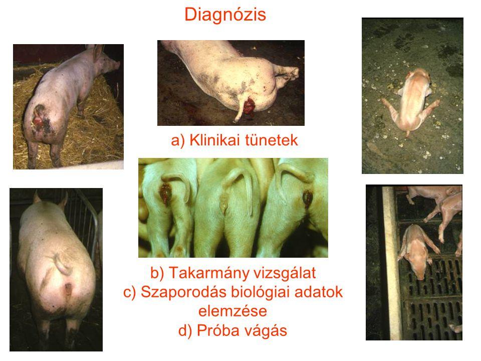 Diagnózis a) Klinikai tünetek b) Takarmány vizsgálat