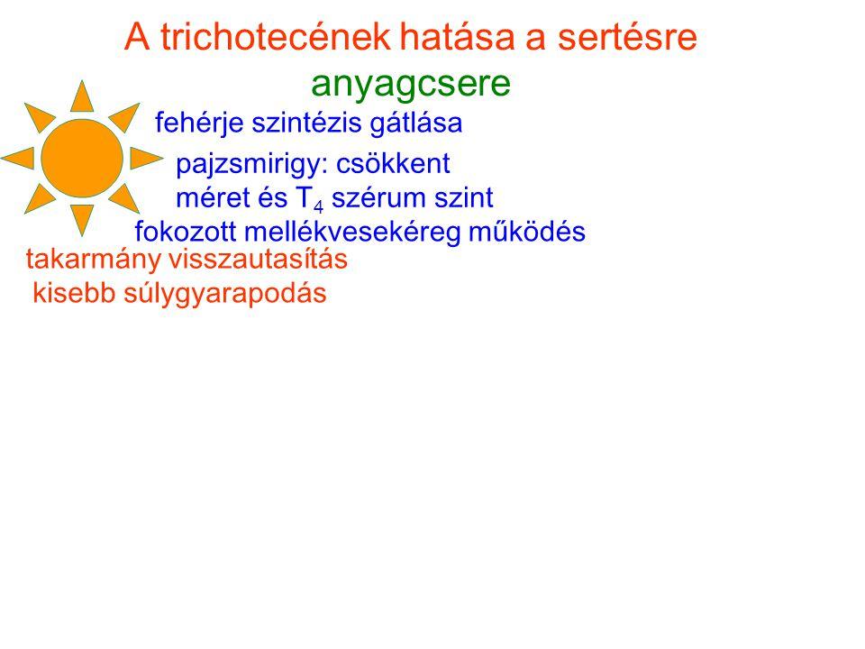A trichotecének hatása a sertésre anyagcsere
