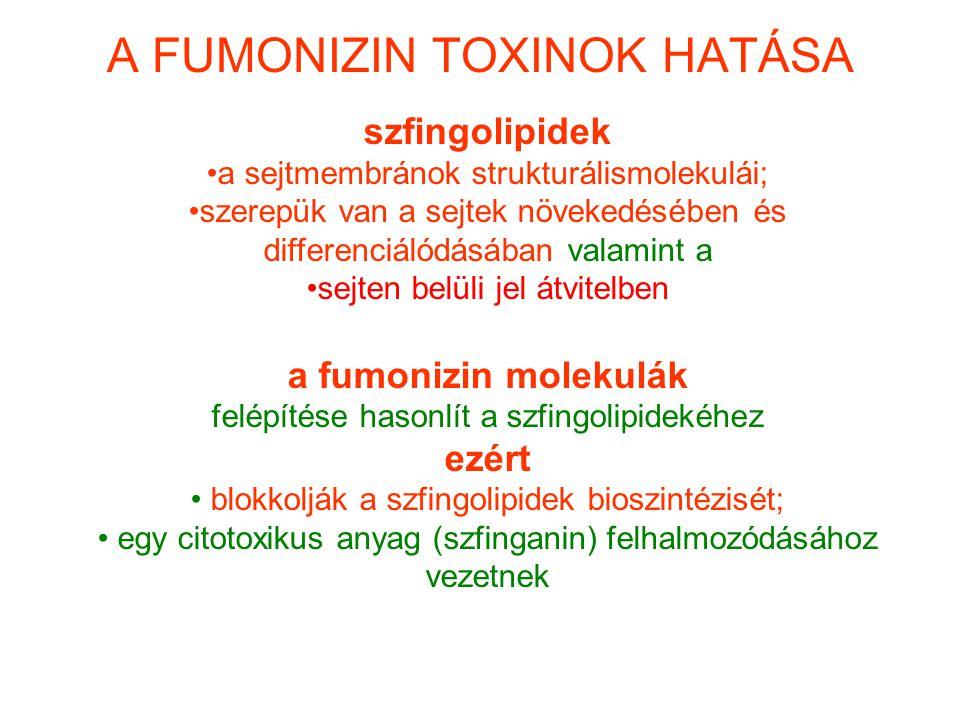 A FUMONIZIN TOXINOK HATÁSA