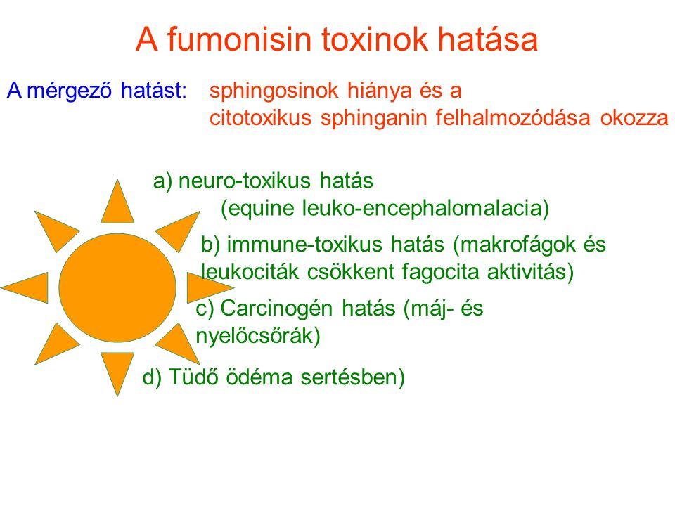 A fumonisin toxinok hatása