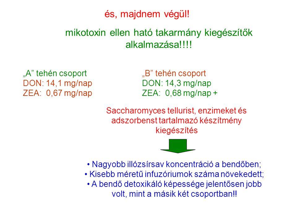 mikotoxin ellen ható takarmány kiegészítők alkalmazása!!!!