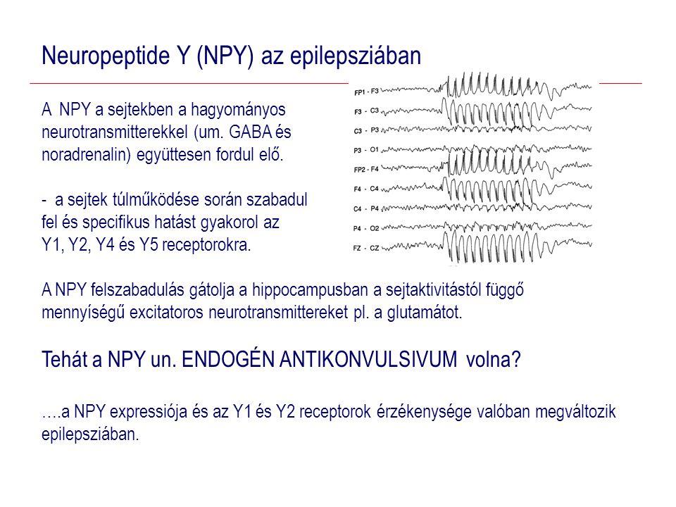 Neuropeptide Y (NPY) az epilepsziában