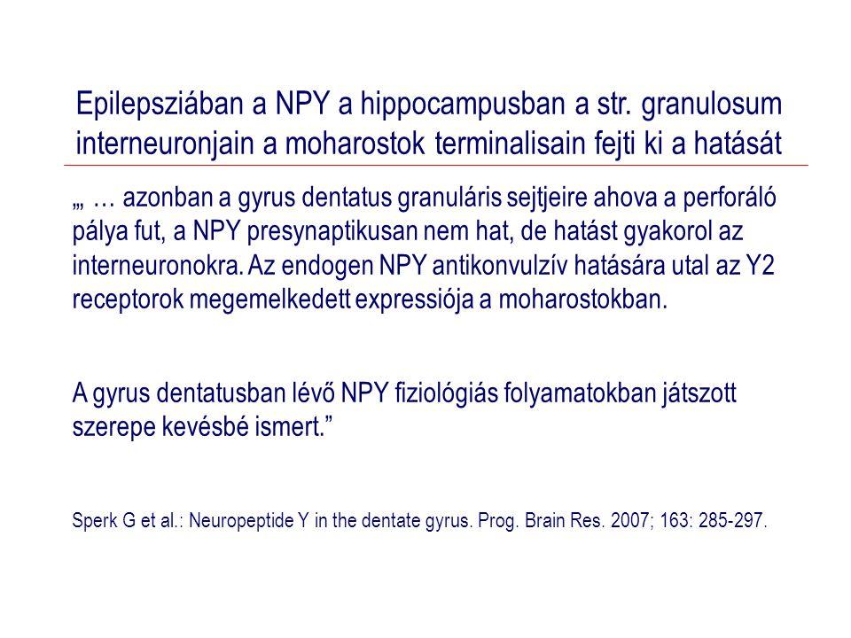 Epilepsziában a NPY a hippocampusban a str