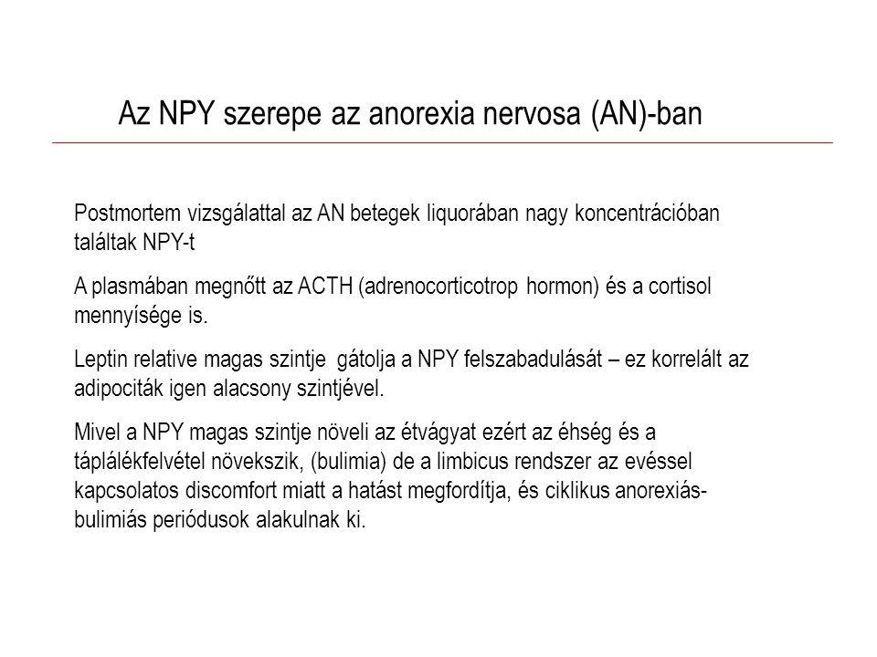 Az NPY szerepe az anorexia nervosa (AN)-ban