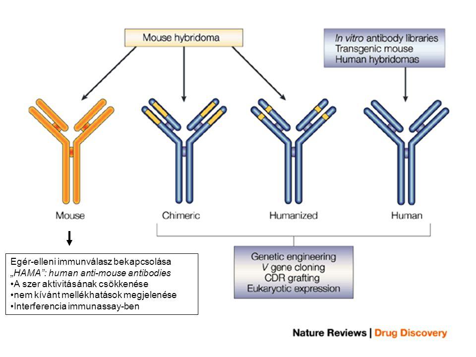 Egér-elleni immunválasz bekapcsolása