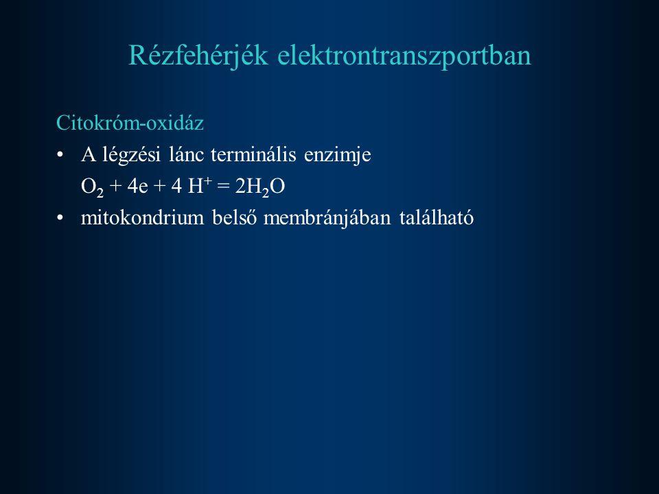 Rézfehérjék elektrontranszportban