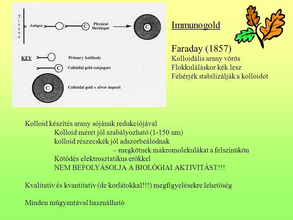 Immunogold Faraday (1857) Kolloidális arany vörös