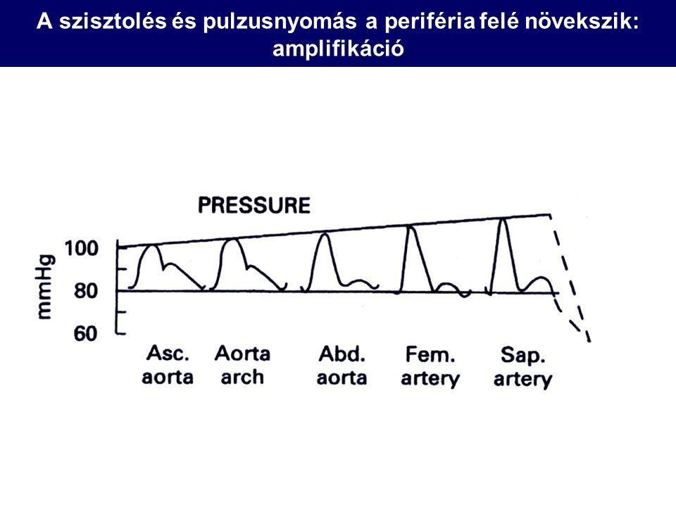 A szisztolés és pulzusnyomás a periféria felé növekszik: amplifikáció