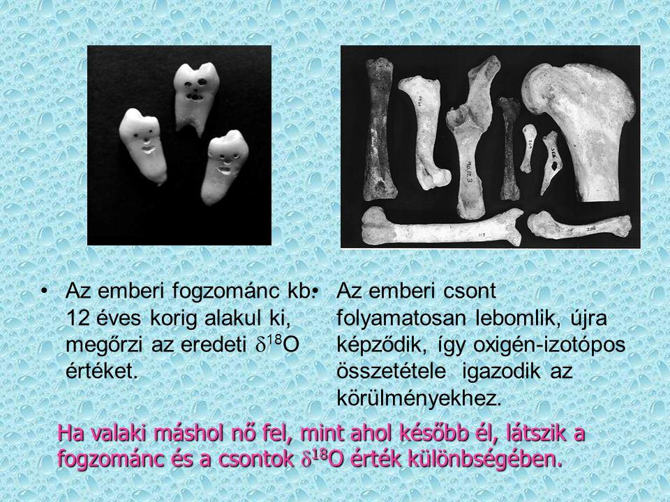 Az emberi fogzománc kb. 12 éves korig alakul ki, megőrzi az eredeti d18O értéket.