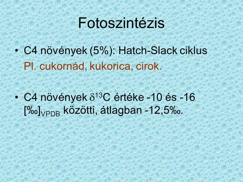 Fotoszintézis C4 növények (5%): Hatch-Slack ciklus