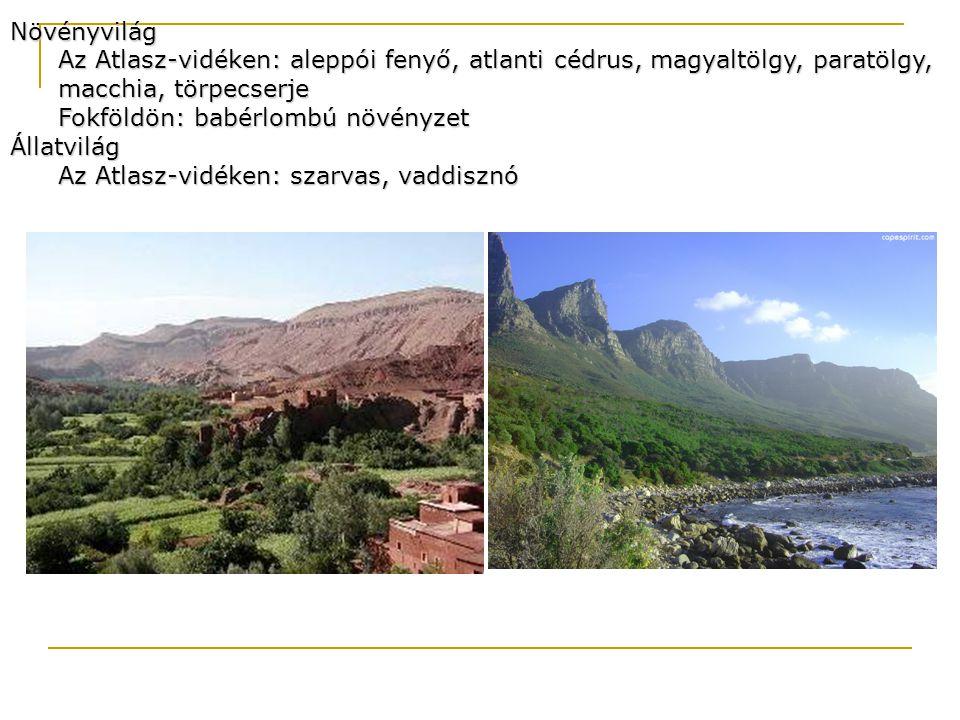 Növényvilág Az Atlasz-vidéken: aleppói fenyő, atlanti cédrus, magyaltölgy, paratölgy, macchia, törpecserje.