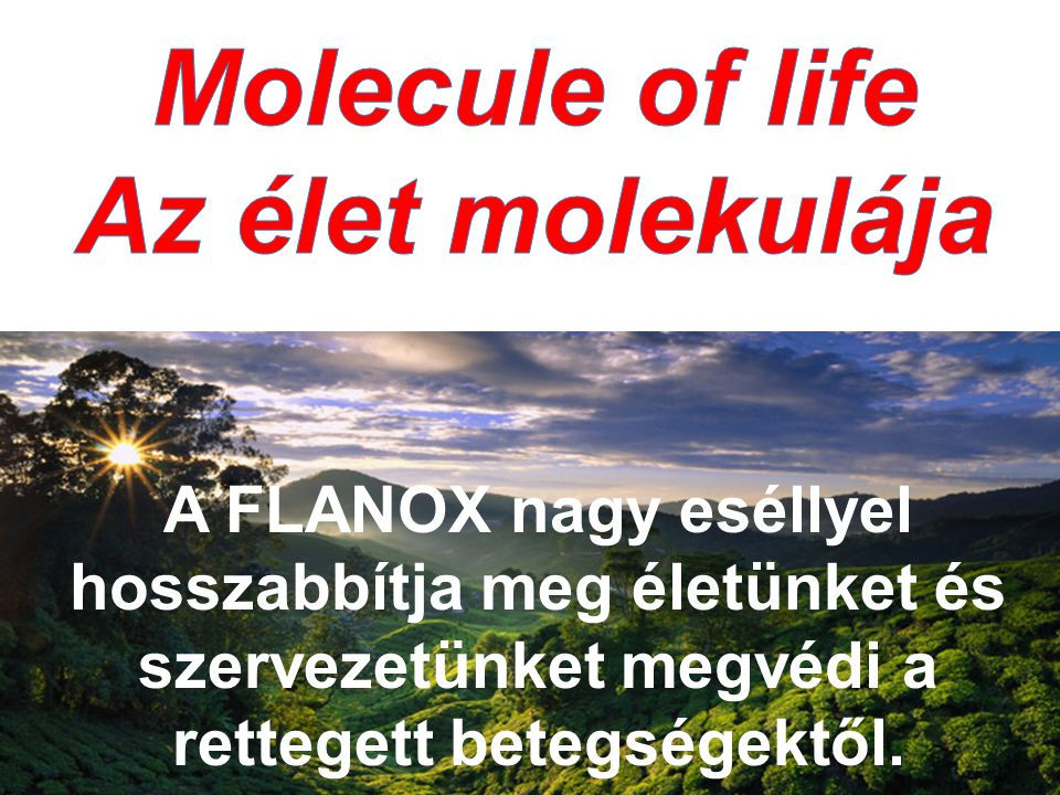 Molecule of life Az élet molekulája