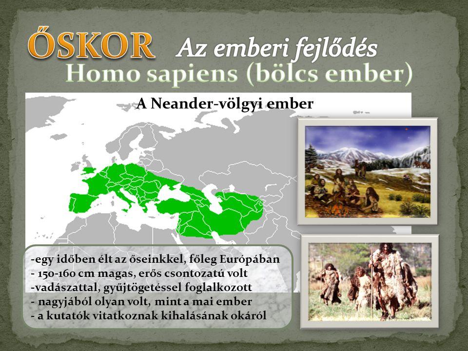 Homo sapiens (bölcs ember)