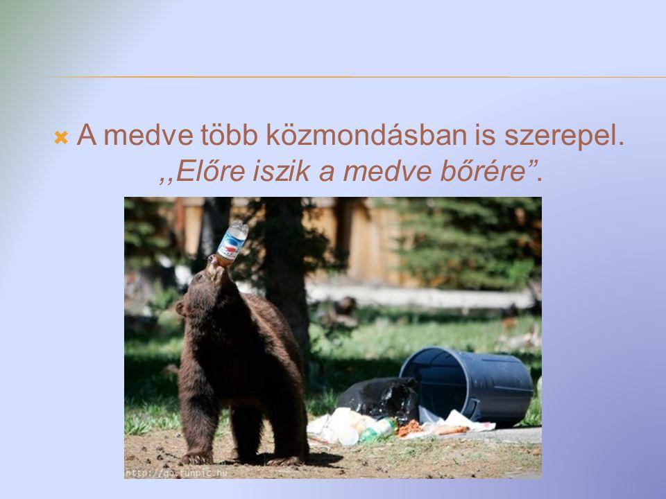 A medve több közmondásban is szerepel. ,,Előre iszik a medve bőrére .