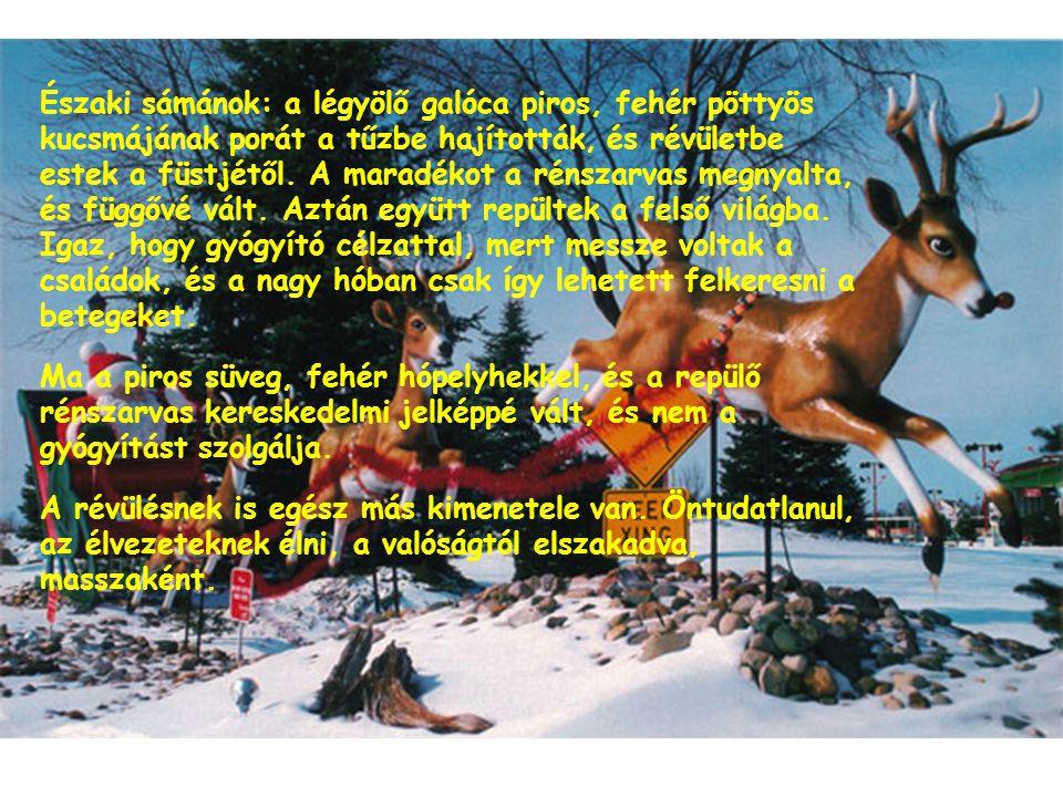 Északi sámánok: a légyölő galóca piros, fehér pöttyös kucsmájának porát a tűzbe hajították, és révületbe estek a füstjétől. A maradékot a rénszarvas megnyalta, és függővé vált. Aztán együtt repültek a felső világba. Igaz, hogy gyógyító célzattal, mert messze voltak a családok, és a nagy hóban csak így lehetett felkeresni a betegeket.