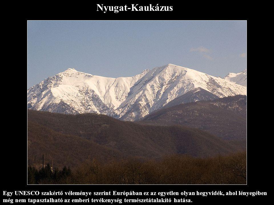 Nyugat-Kaukázus