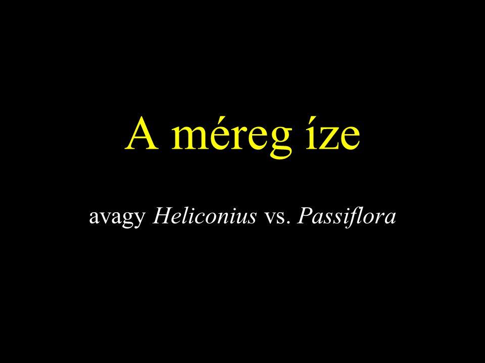 avagy Heliconius vs. Passiflora