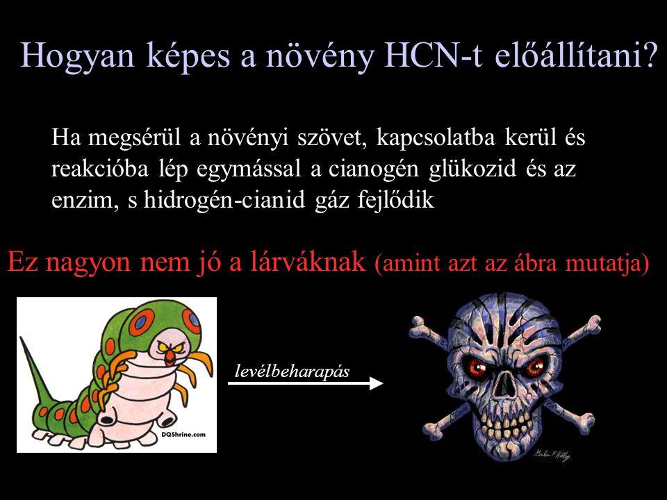 Hogyan képes a növény HCN-t előállítani