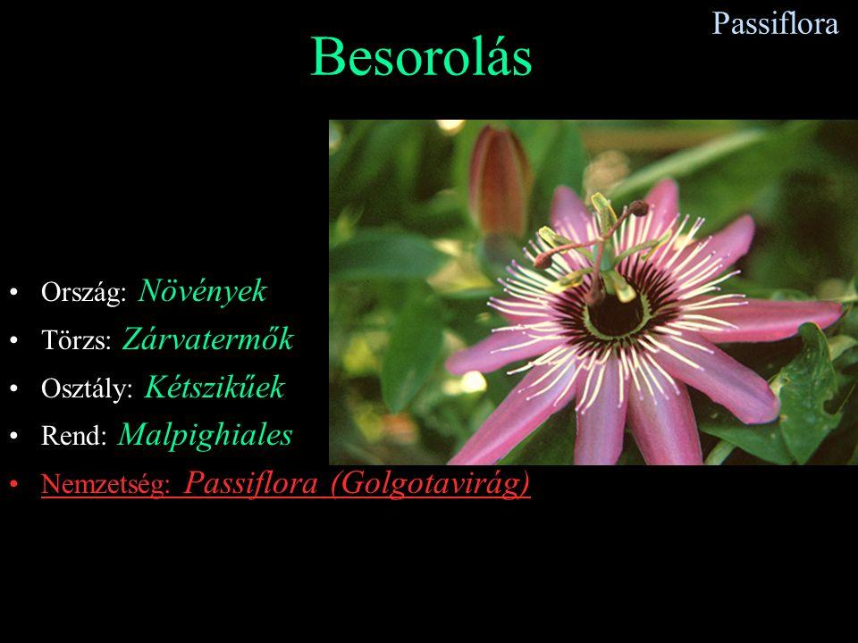 Besorolás Passiflora Ország: Növények Törzs: Zárvatermők